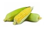 Picture of Sweet Corn on Cob ^ Husk (1 Corn)