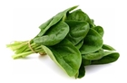 Picture of Fresh Spinach Leaf
