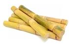 Picture of Sugar Cane 400g (Saccharum officinarum)