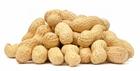 Picture of Fresh Peanut 250g (Arachis hypogaea)