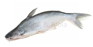 Picture of Pangasius Whole (White Catfish)