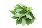 Picture of Fresh Molokhia (Ewedu) - Box (10 Bunches)