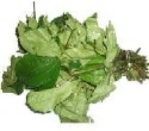 Picture of Fresh Ugu Leaf (Telfairia Occidentalis) - Box (10 Bunches)