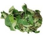 Picture of Fresh Uziza (Piper Guineense) - Box (10 Bunches)