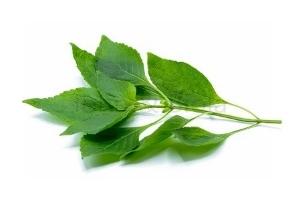 Picture of Frozen Whole Fresh Scent Leaf (Ocimum Gratissimum)