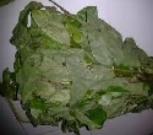 Picture of Frozen Whole Fresh Oha (Pterocarpus Mildraedii)
